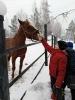 Катание на лошадях_6